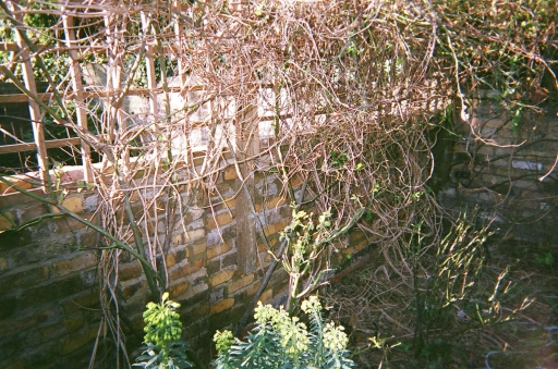 Victorian wall rebuilt with no plant disruption at all